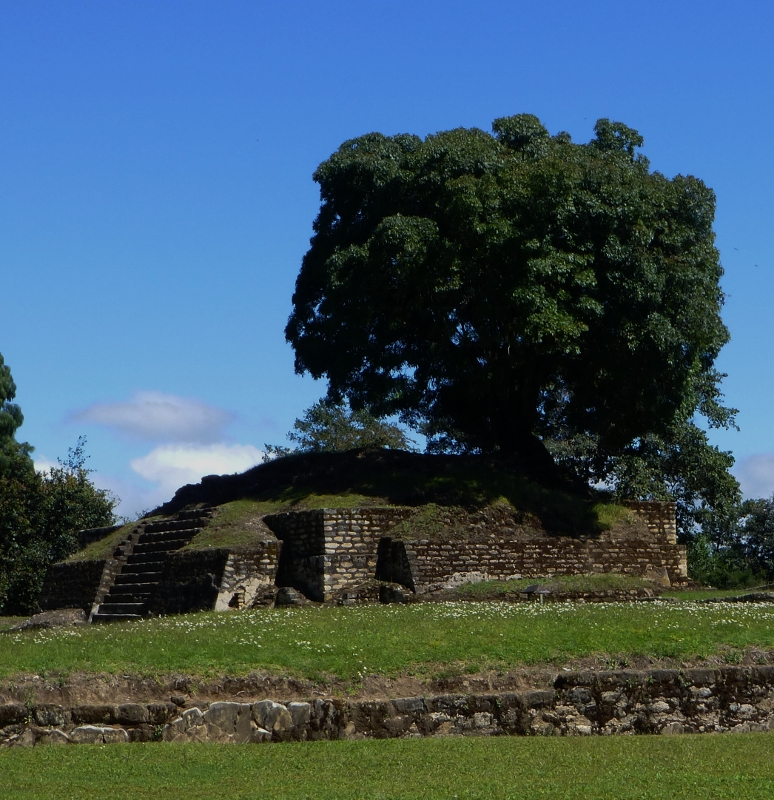 Ceiba tree grows on ruins of Iximche